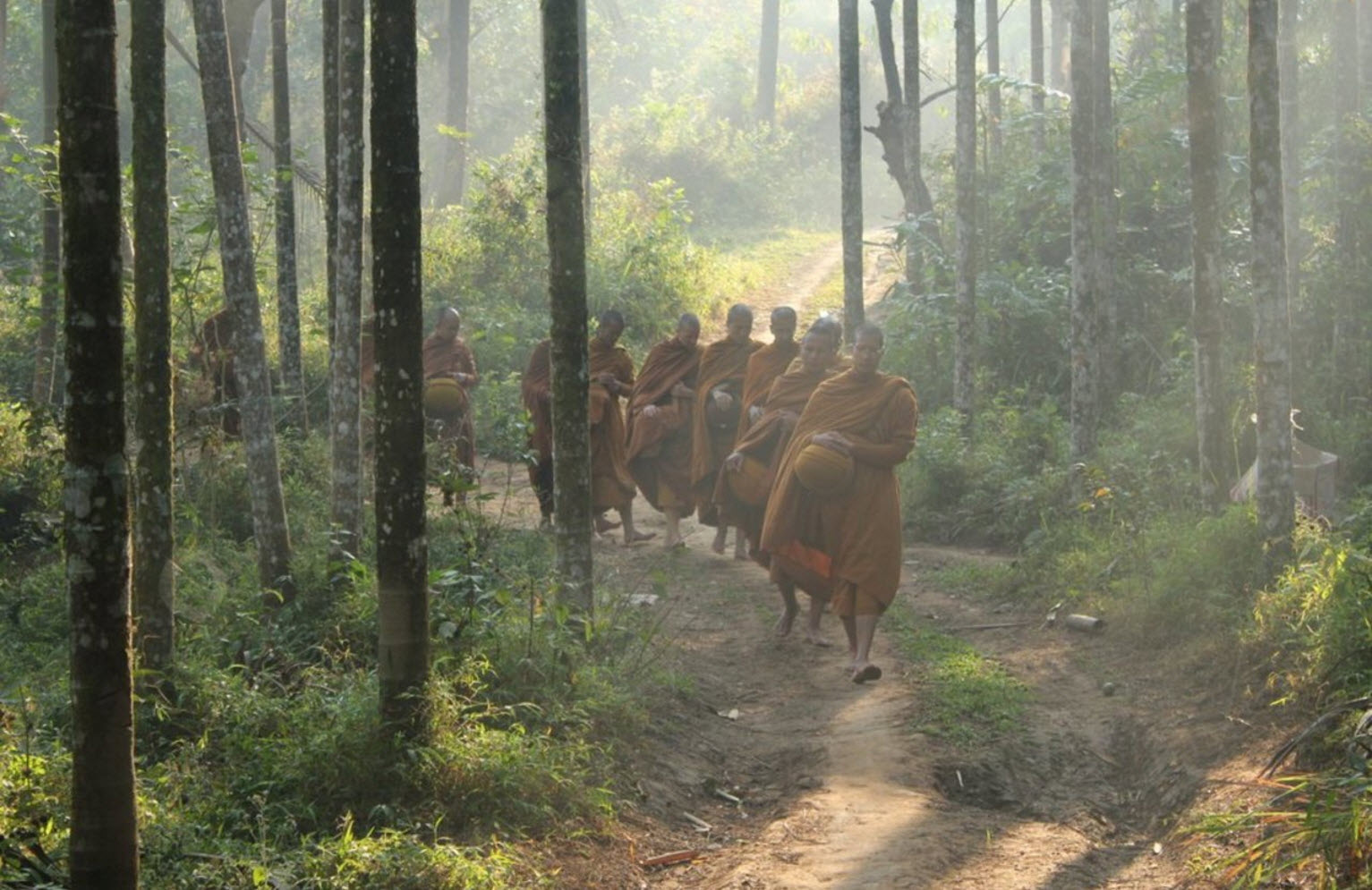 Buddhist Wisdom of the Thai Forest Tradition